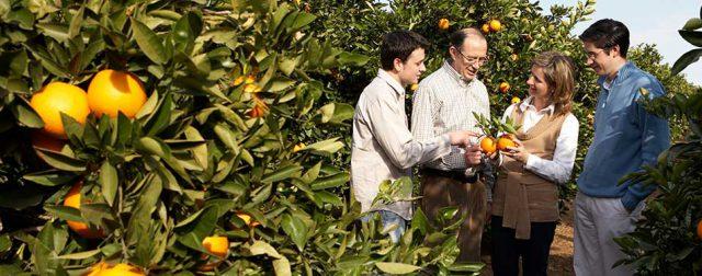 Naranja, un buen remedio para combatir el coronavirus. ¡Qué! 1