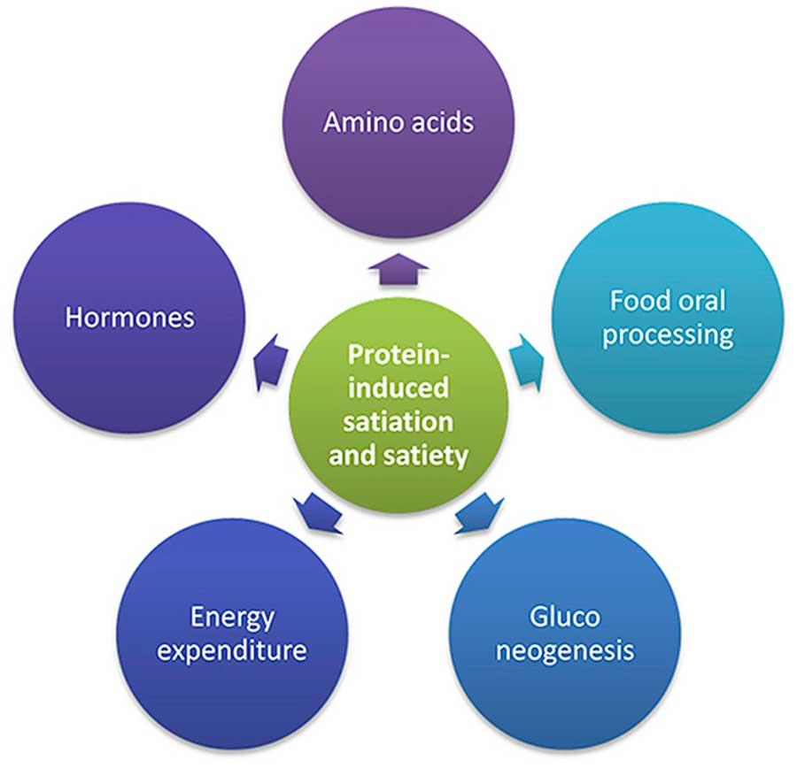 Cómo las proteínas pueden ayudarlo a perder peso de forma natural según la ciencia 1