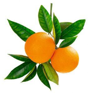 tallo naranja