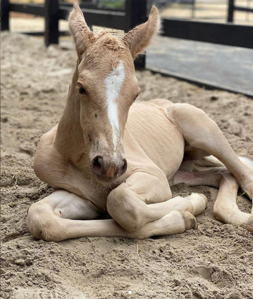 El increíble video de Elsa Pataky ayudando a una yegua a dar a luz a su potrillo 1