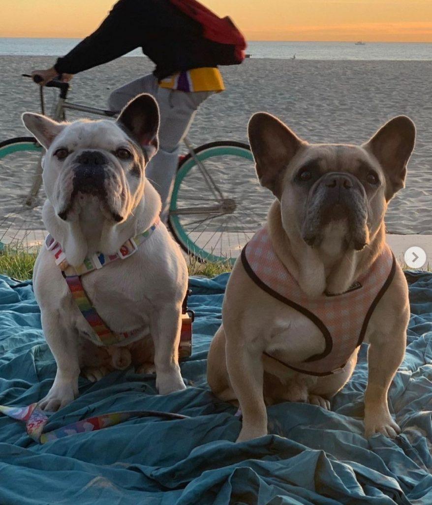 Lady Gaga recupera los dos perros que le habían robado 1