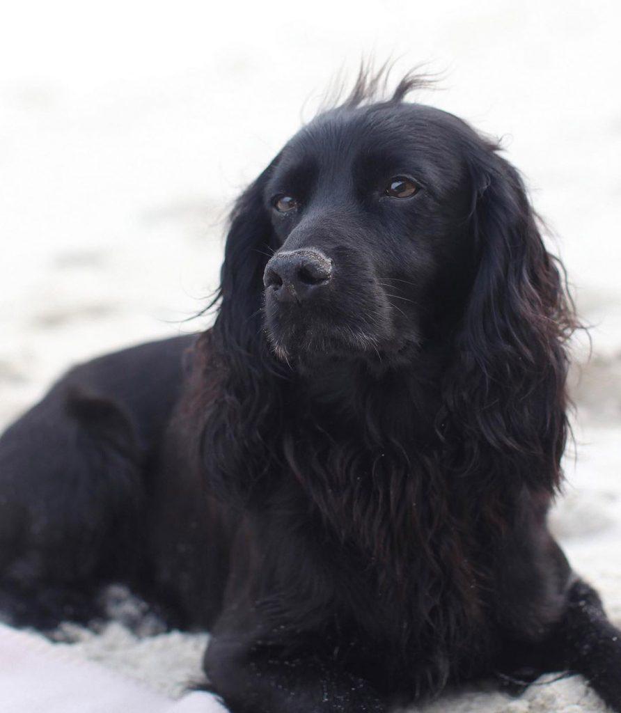 Los duques de Cambridge lloran la muerte de su perro Lupo 1